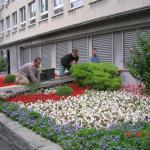 Pflege von Sommerflor-Rabatte
