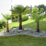 Steingarten mit Andeer-Steinen und Palmen