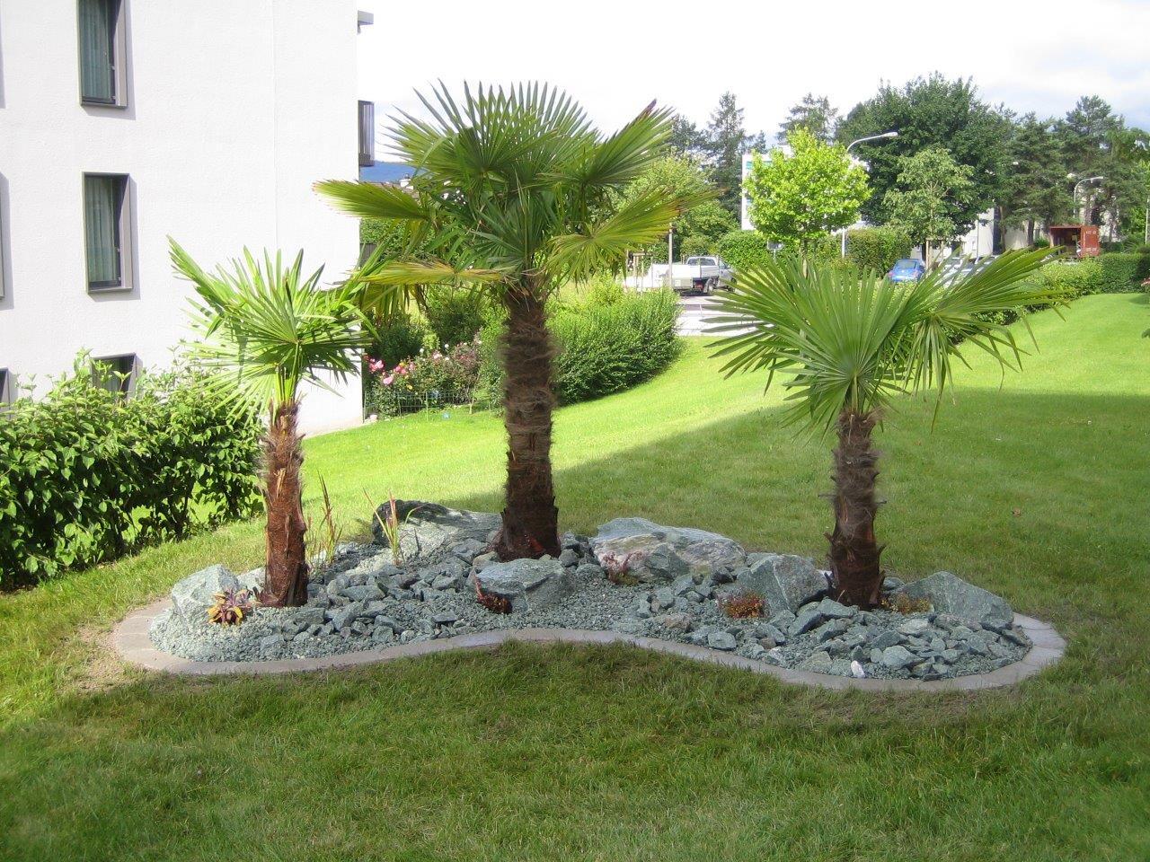 Steingarten Mit Andeer Steinen Und Palmen