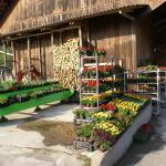 Pflanzentag 2009 5