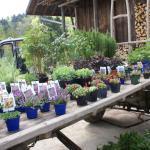 Pflanzentag 2010 2